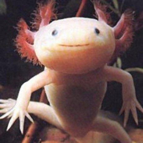 jgaskins avatar